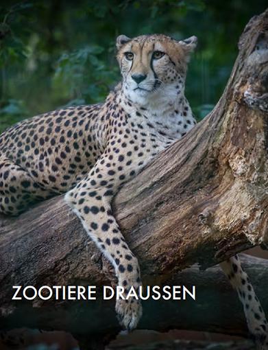 zoodraussen
